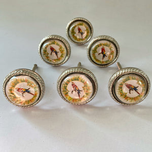Yellow Parrot Drawer Knobs Set of 6