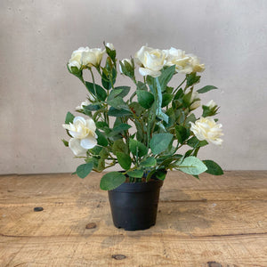 Faux White Rose Plant