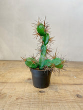 Load image into Gallery viewer, Faux Cactus