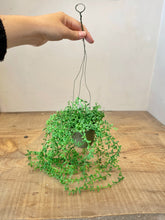 Load image into Gallery viewer, String of Pearls Hanging Plant