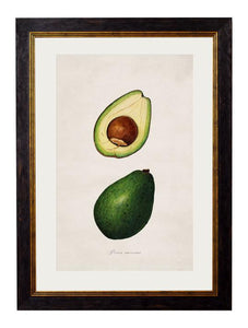 Framed Print - Avocado