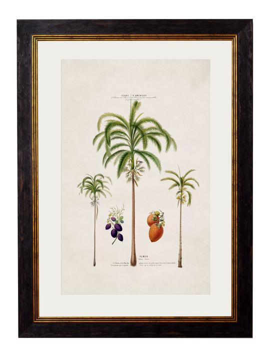 Framed Print - Areca Palms