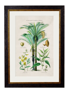 Framed Print - Tropical Plants Used As Clothing