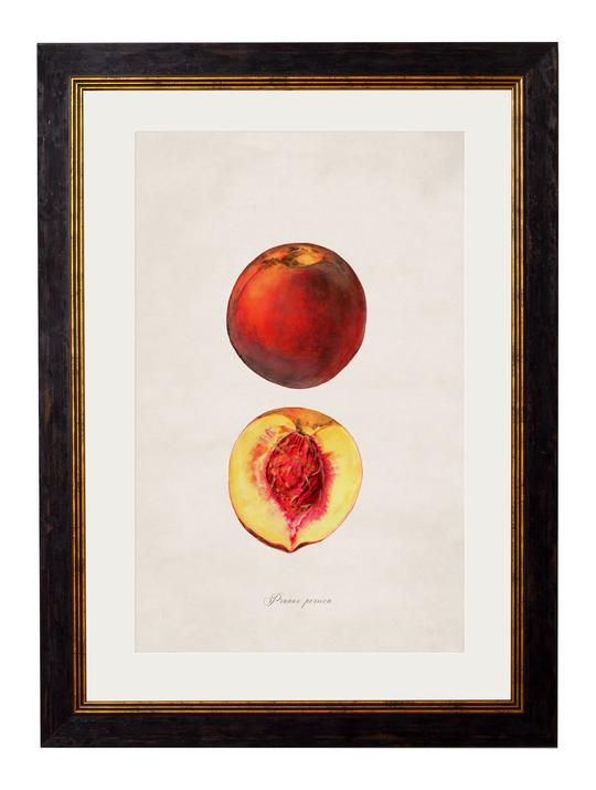 Framed Print - Peach