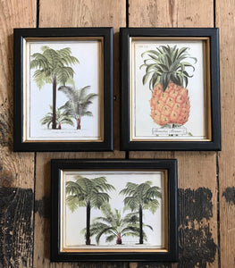 Framed Pineapple Print Small