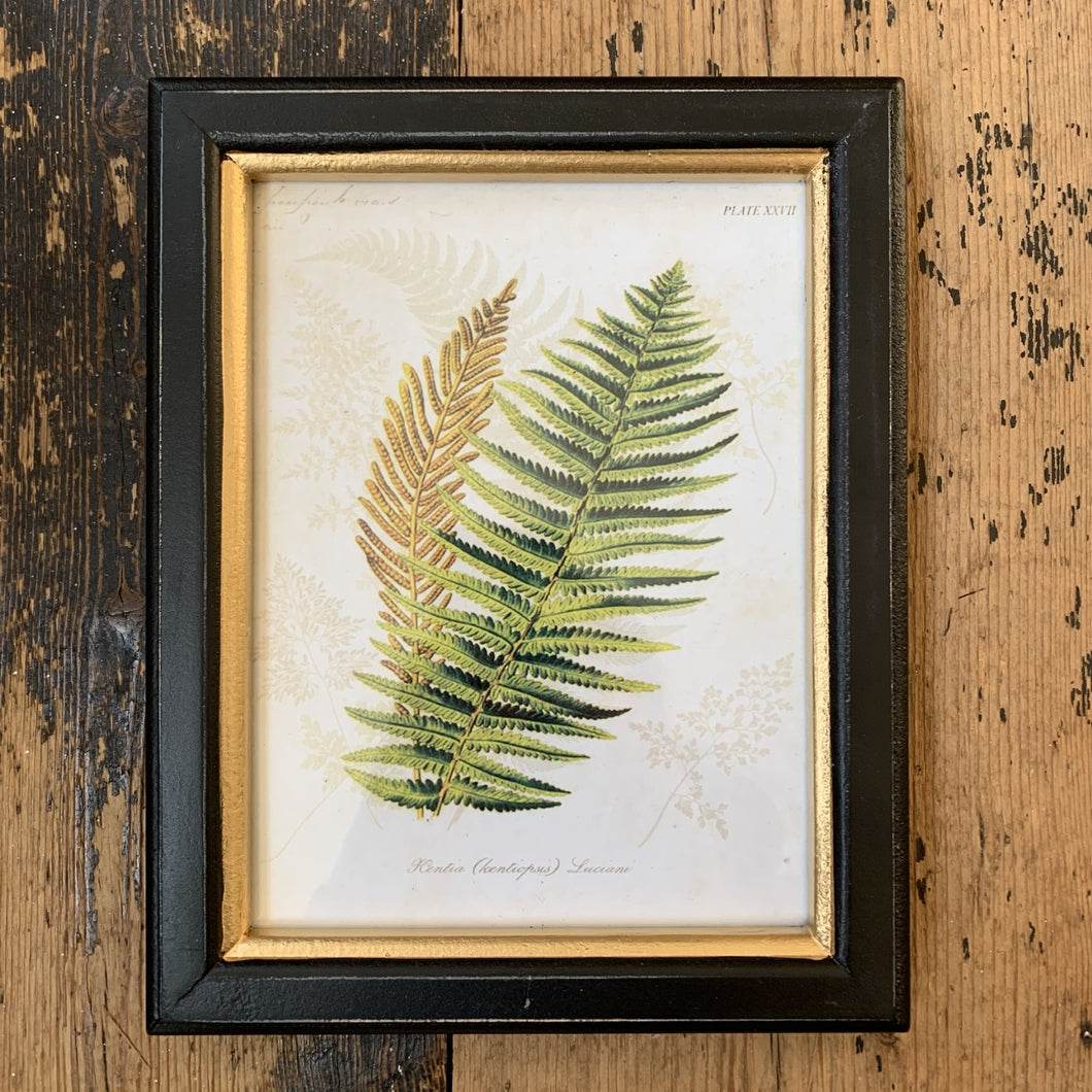 Framed Fern Print Small