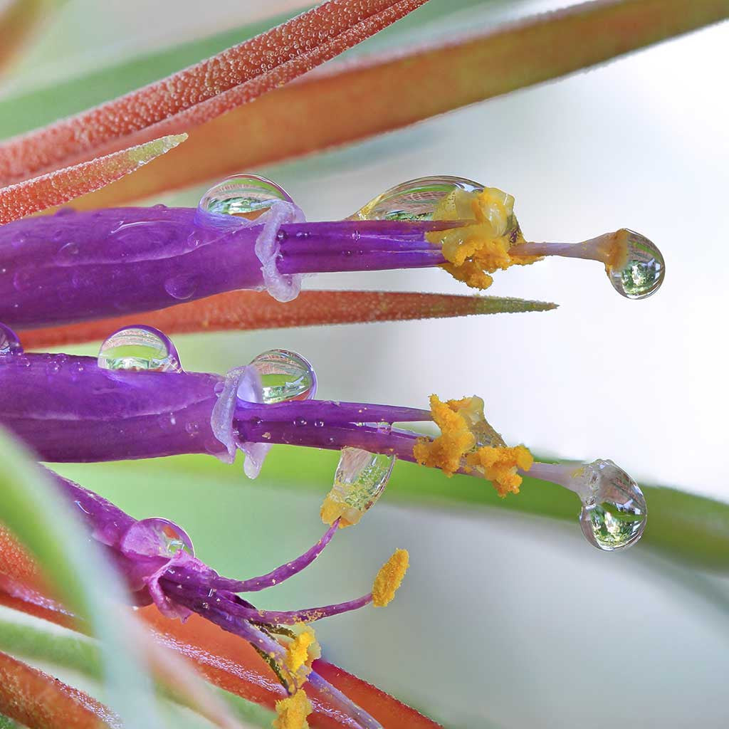 Tips For Watering Your Air Plants
