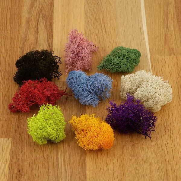 Accessories - Coloured Reindeer Moss