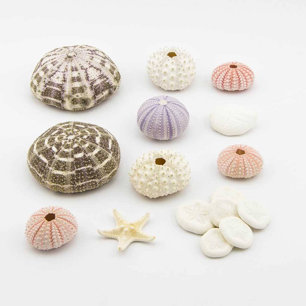 Accessories - Mega Urchin Pack