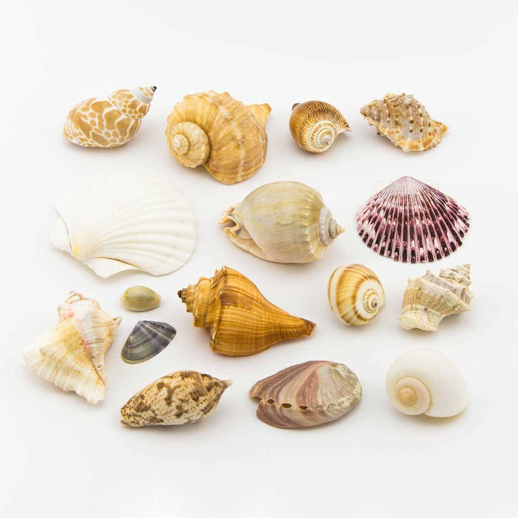 Accessories - Mixed Shell Pack