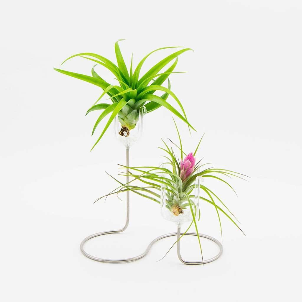 Air Plant Display Stand Air Plant Decor