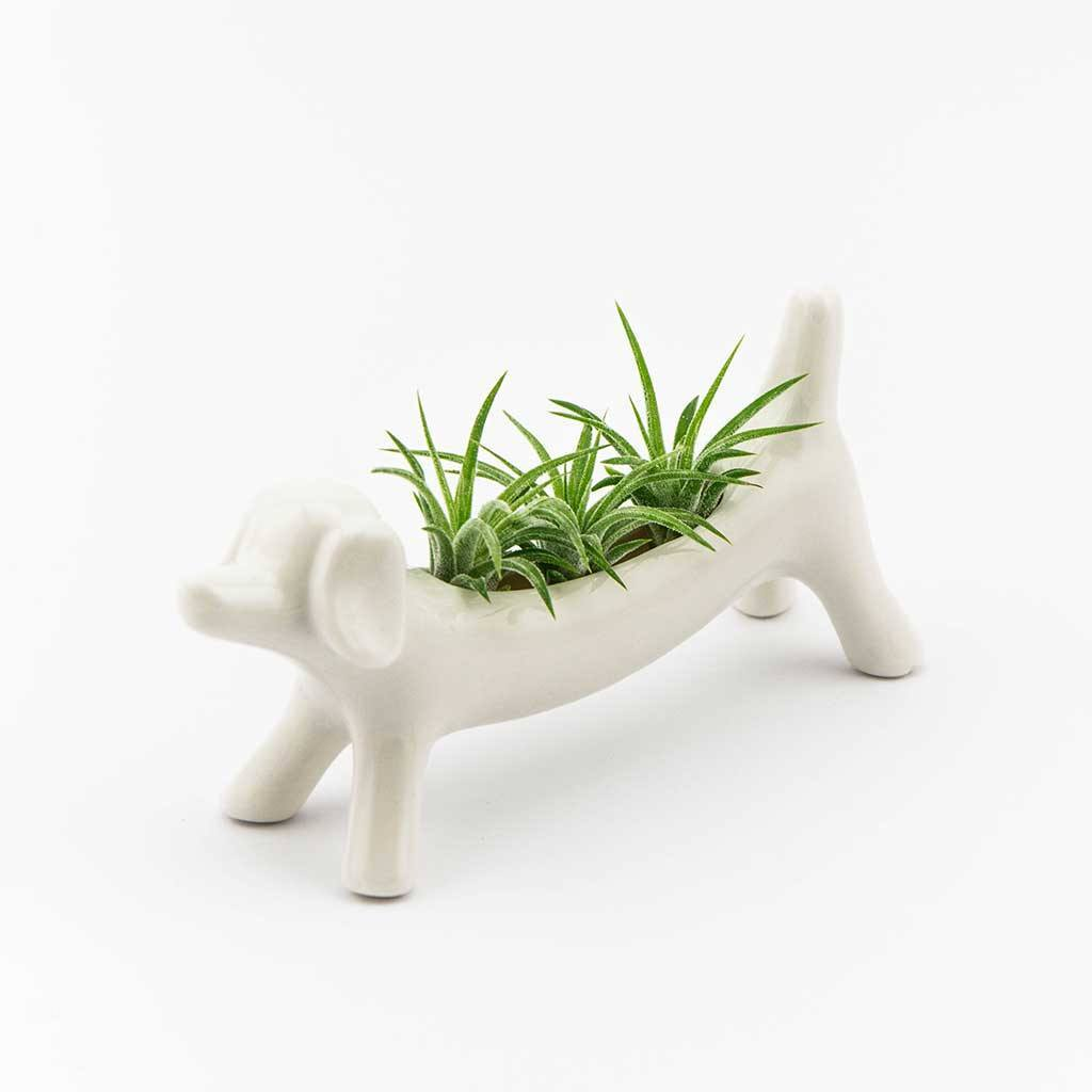 Decor - Sausage Dog Planter