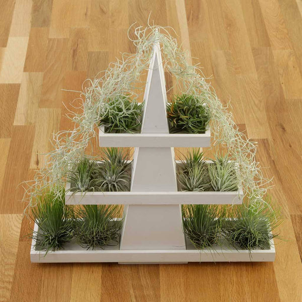 Gifts - Air Plant Christmas Tree
