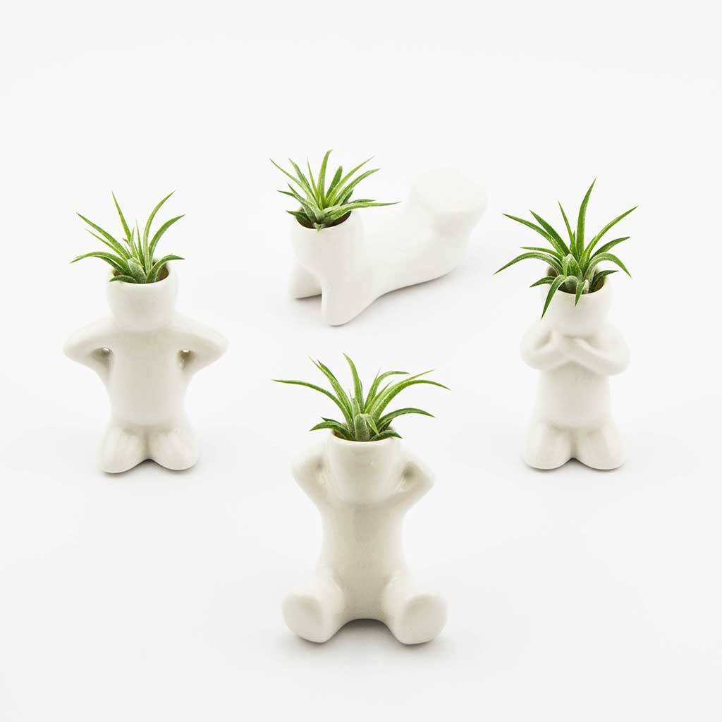 Gifts - Air Plant People
