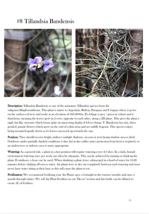 101 Tillandsia & How to Grow Them (eBook)