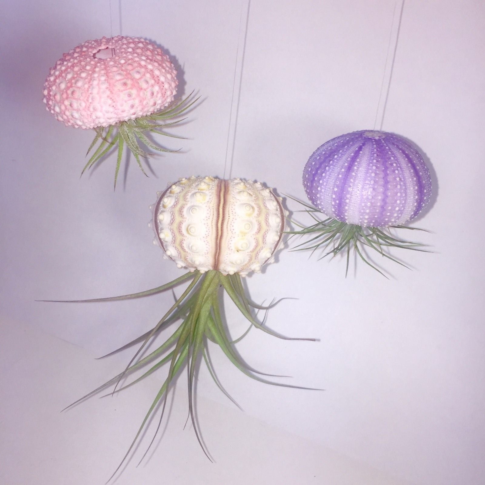 Air Plant Jellyfish