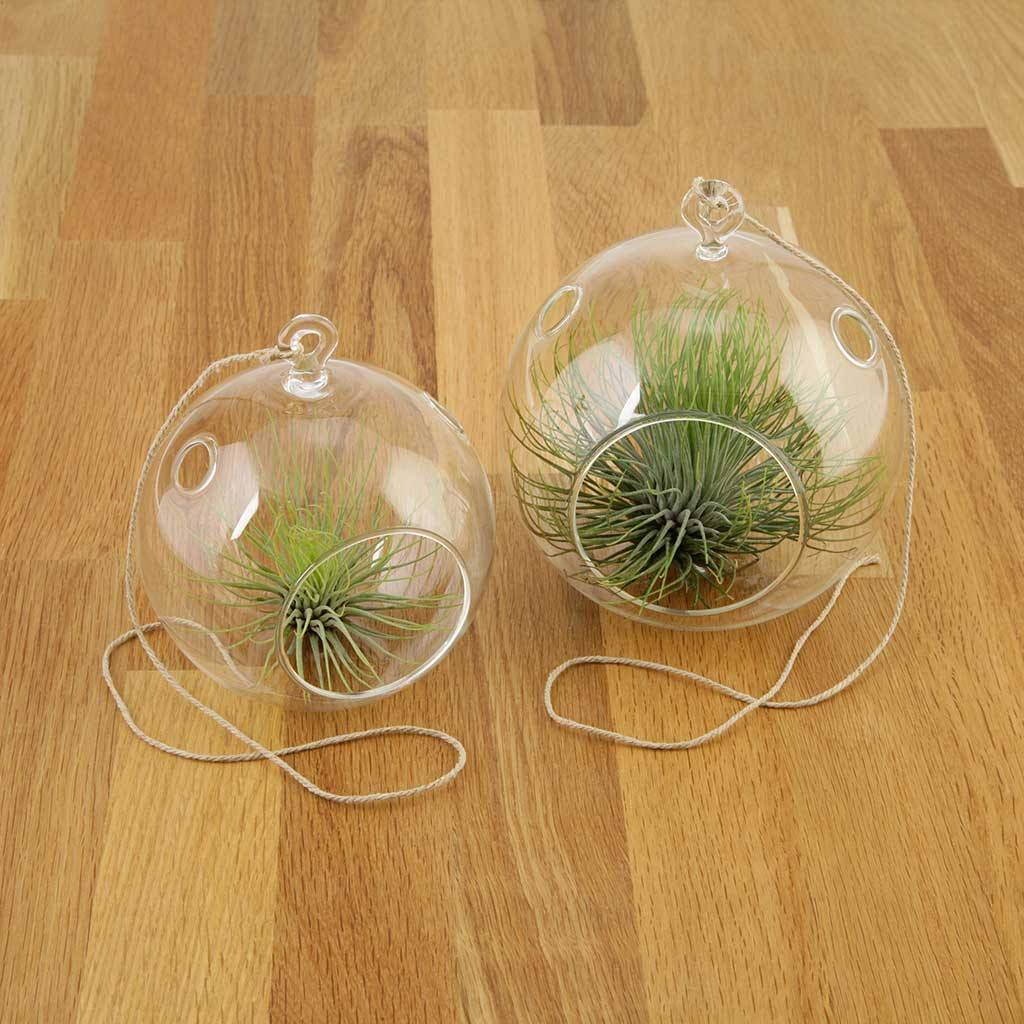 Terrariums - Clean Terrarium