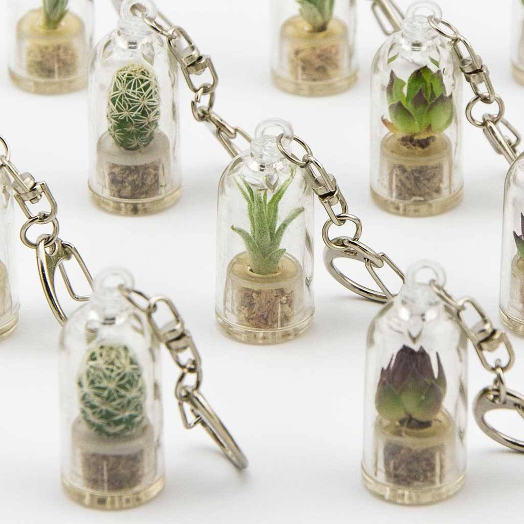 mini terrarium air plant decor. Black Bedroom Furniture Sets. Home Design Ideas