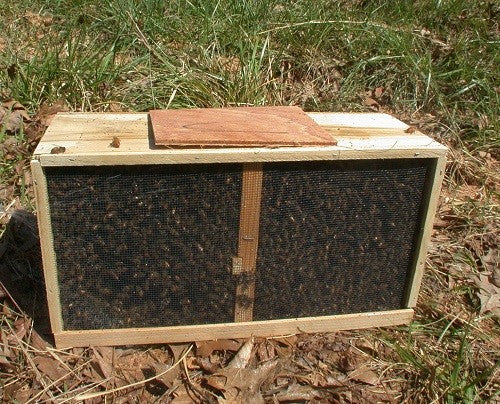 3 Lbs. Package of Italian Honey Bees with UNMARKED Queen