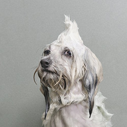 Wet Dog - All She Wrote