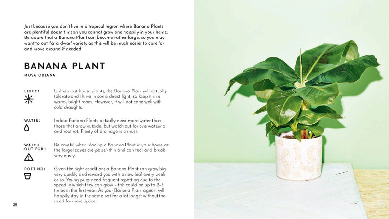 Little Book of House Plants - All She Wrote