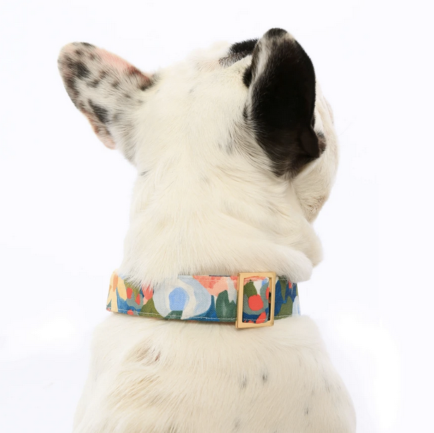 Wildflower Dog Collar - All She Wrote