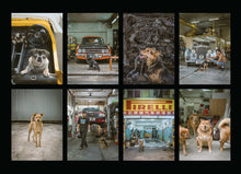 Load image into Gallery viewer, Hong Kong Dogs Postcards (set of 8)