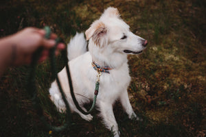 Moss Green + Brass Rope Dog Leash