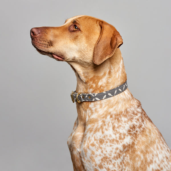 Grey Jaipur + Brass Cafe Collar