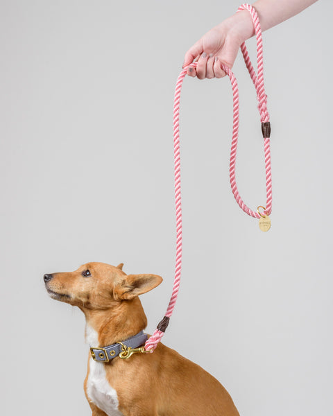 Rose Pink + Brass Rope Dog Leash
