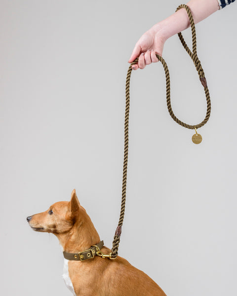 Olive + Brass Rope Dog Leash