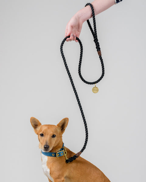 Midnight Black + Brass Rope Dog Leash