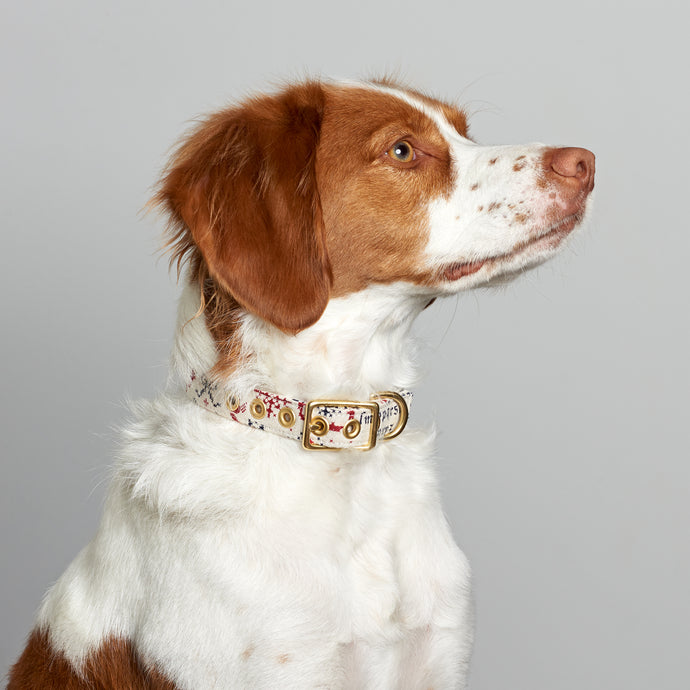 Festive Christmas + Brass Cafe Collar