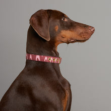 Load image into Gallery viewer, Desert Rose + Brass Cafe Collar