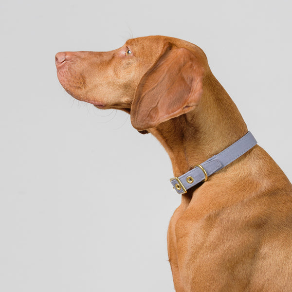 Storm Grey + Brass All Weather Collar