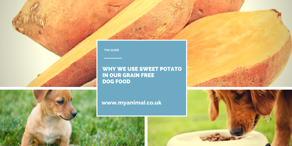 Why we use Sweet Potatoes  in our Grain Free Dog Food.