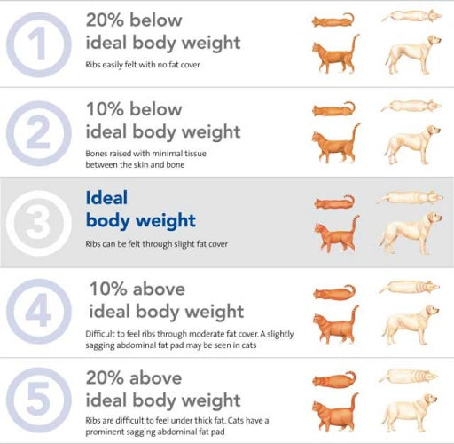 How to check your Dogs Body Condition Score
