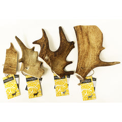 Fallow Antler - My Animal - 1