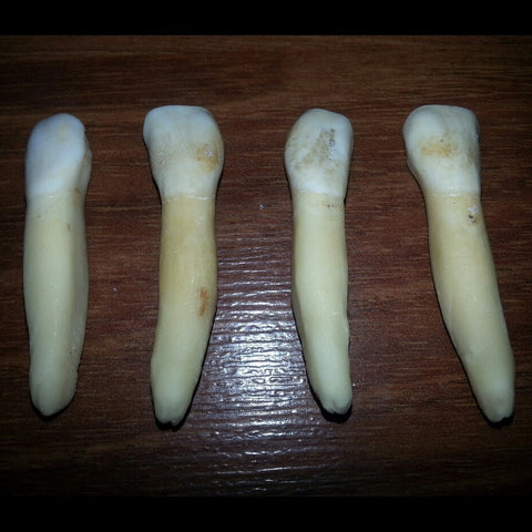 Cow Tooth Pairs