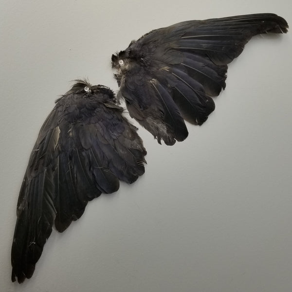 Carrion Crow Wing