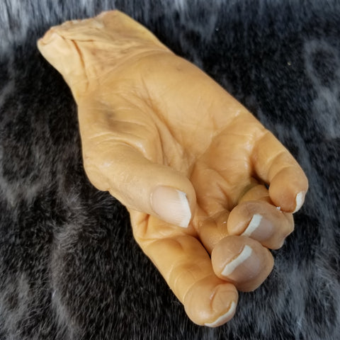 Antique Human Hand, Plastinated