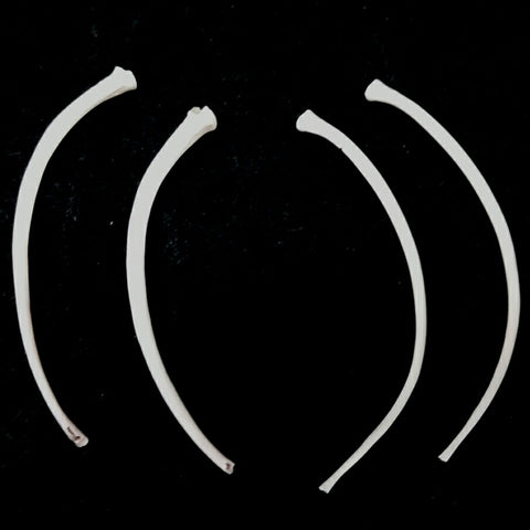 Ball Python Rib Bones (Set of 4)