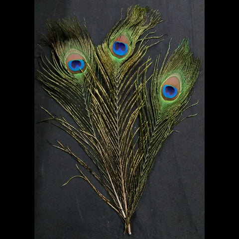 Peacock Feathers, Sets of 5