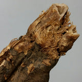 Ancient Egyptian Mummy Hand