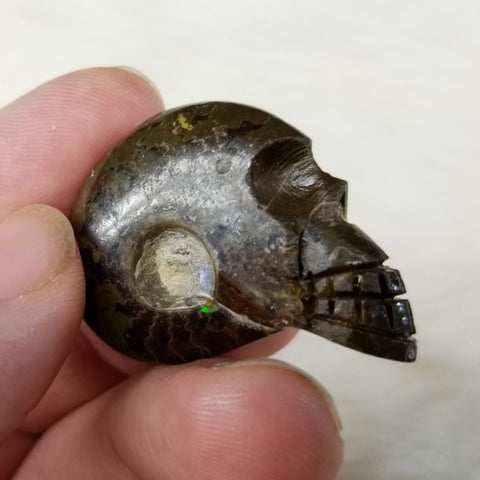 Ammonites, Skull Carvings