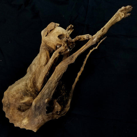 Mummified Cat, Natural