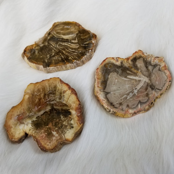 Petrified Wood Slices (SALE)