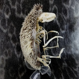 African Pygmy Hedgehog Skeleton B