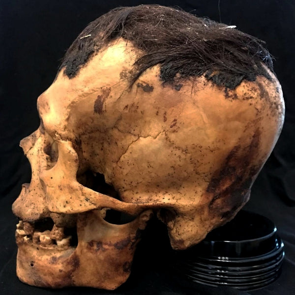 Peruvian Elongated Mummy Skull