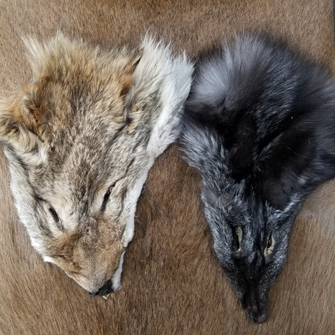 Coyote & Fox Face Set